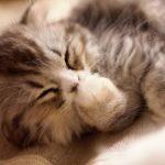 健康的な美しさを高める【睡眠】3つのヒント